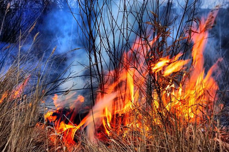 χλόη πυρκαγιάς hdr στοκ εικόνα με δικαίωμα ελεύθερης χρήσης