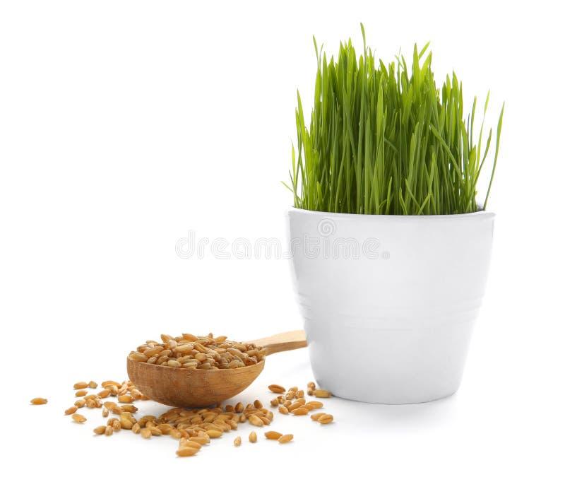Χλόη σίτου flowerpot και ξύλινο κουτάλι με τους σπόρους στοκ εικόνες