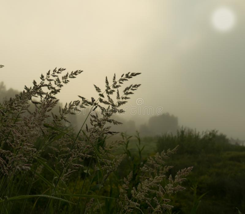 Χλόη σε ένα ομιχλώδες πρωί στοκ φωτογραφία με δικαίωμα ελεύθερης χρήσης