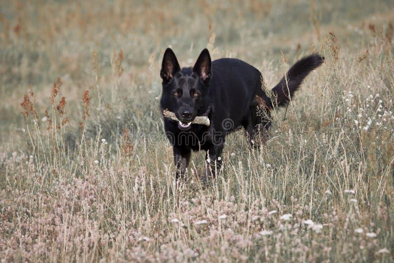 χλόη σκυλιών στοκ εικόνες με δικαίωμα ελεύθερης χρήσης