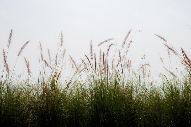 Χλόη στον τομέα με τον ουρανό στοκ φωτογραφίες με δικαίωμα ελεύθερης χρήσης