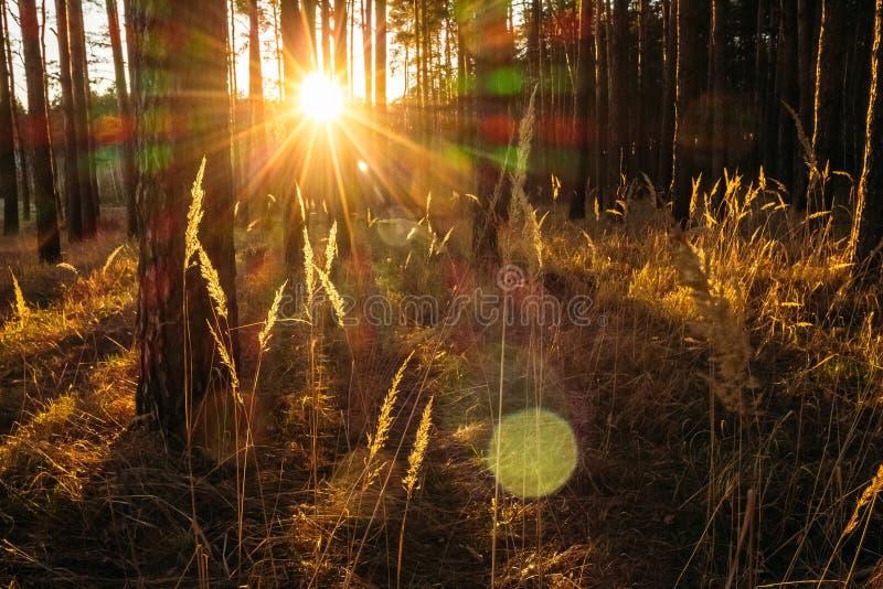 Χλόη τομέων με τον ήλιο ηλιοβασιλέματος στοκ φωτογραφίες