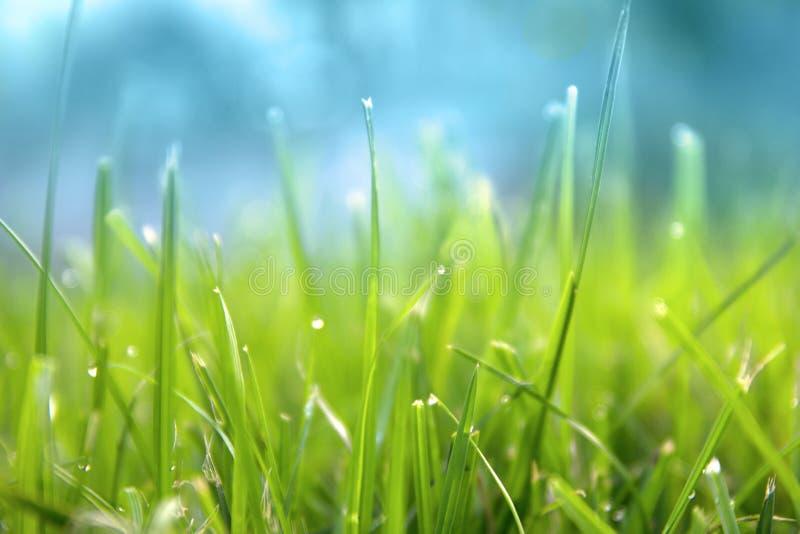 Χλόη Φρέσκια πράσινη χλόη άνοιξη με την κινηματογράφηση σε πρώτο πλάνο πτώσεων δροσιάς ήλιος στρέψτε μαλακό αφηρημένη φύση ανασκό στοκ φωτογραφία με δικαίωμα ελεύθερης χρήσης