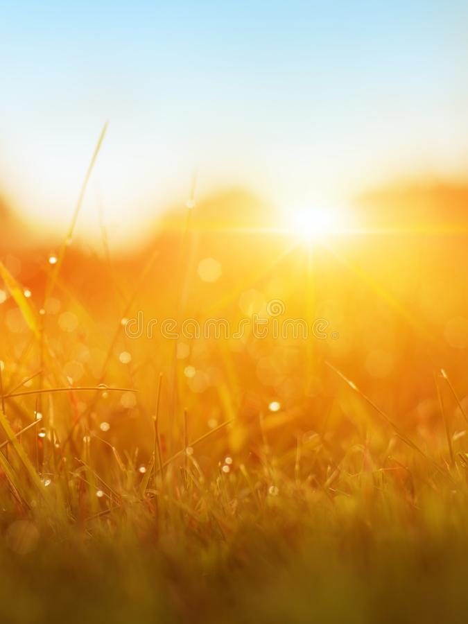 Χλόη Φρέσκια πράσινη χλόη άνοιξη με την κινηματογράφηση σε πρώτο πλάνο πτώσεων δροσιάς ήλιος στρέψτε μαλακό αφηρημένη φύση ανασκό στοκ εικόνες