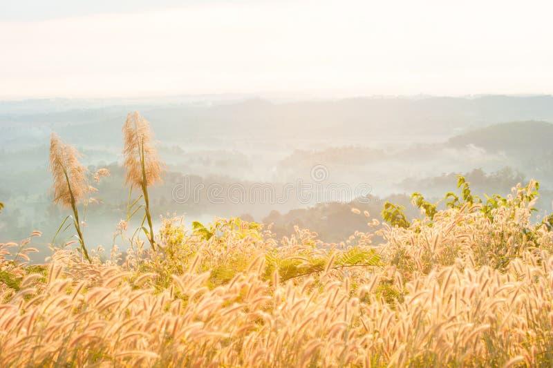 Χλόη Desho στην υδρονέφωση κάτω από τον ήλιο που λάμπει στην κορυφή βουνών στοκ φωτογραφίες με δικαίωμα ελεύθερης χρήσης