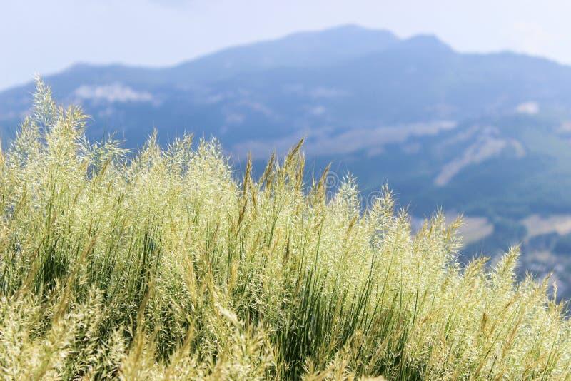 Χλόη mountainside στοκ φωτογραφία με δικαίωμα ελεύθερης χρήσης