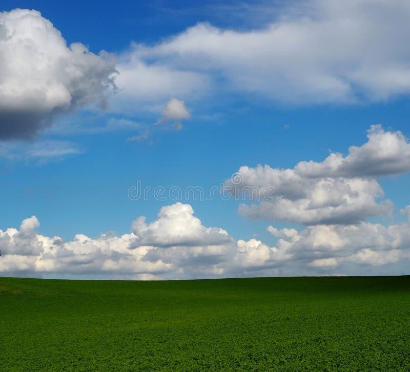 Χνουδωτή άνοδος σύννεφων επάνω πέρα από έναν απλά πράσινο τομέα χλόης Υπόβαθρο σύννεφων scape στοκ εικόνες