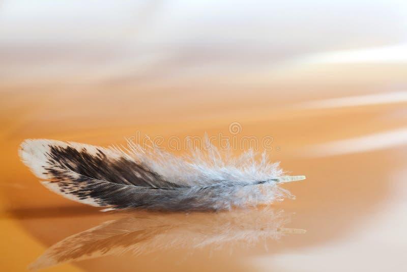 Χνουδωτό φτερό στο θολωμένο αφηρημένο υπόβαθρο Μακρο σχέδιο και σύσταση φτερώματος πουλιών άποψης ζωηρόχρωμες Ρομαντική προσφορά στοκ φωτογραφία με δικαίωμα ελεύθερης χρήσης