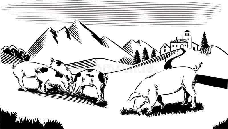 Χοίροι σε ένα λιβάδι βουνών απεικόνιση αποθεμάτων