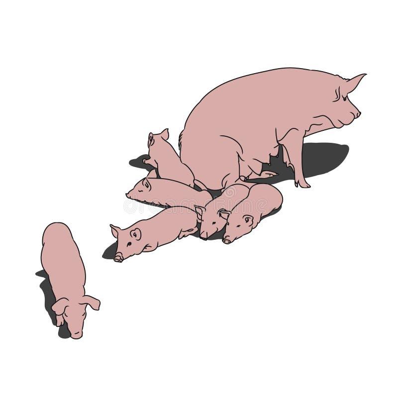 Χοίρος και χοιρίδια (ρόδινοι) απεικόνιση αποθεμάτων