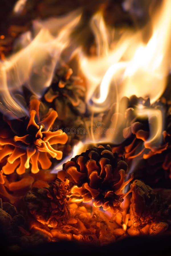 Χοβόλεις πεύκων μαλακού υποβάθρου πυρκαγιάς κώνων του ρομαντικού στοκ φωτογραφία