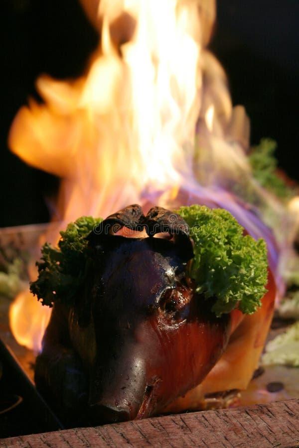 χοιρίδιο καψίματος στοκ εικόνες με δικαίωμα ελεύθερης χρήσης