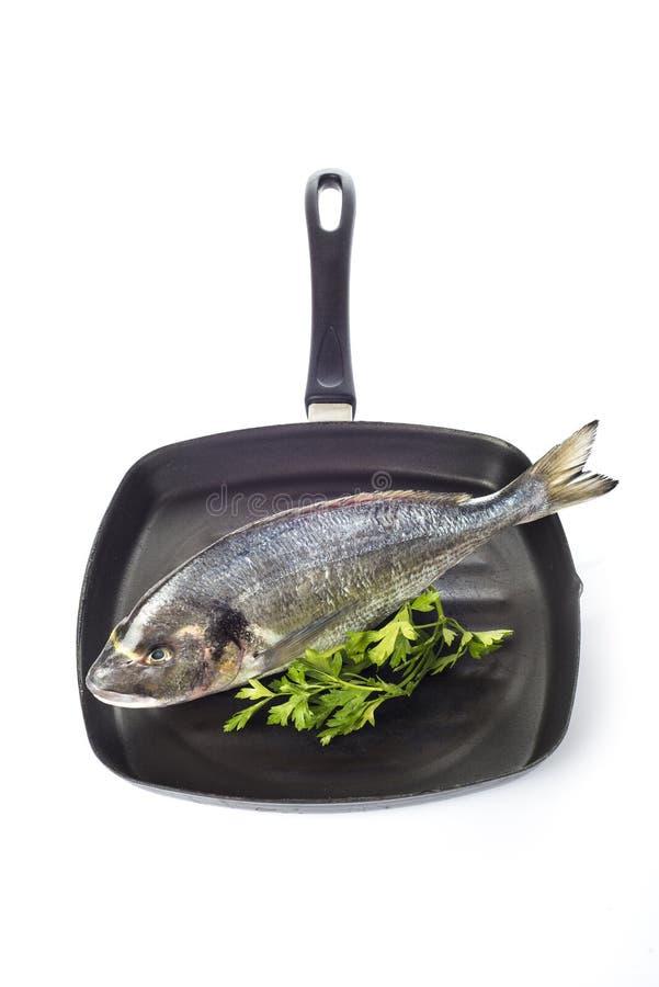 Χοιρομητέρα-επικεφαλής ψάρια τσιπουρών σε ένα τηγάνι που απομονώνεται στοκ εικόνες