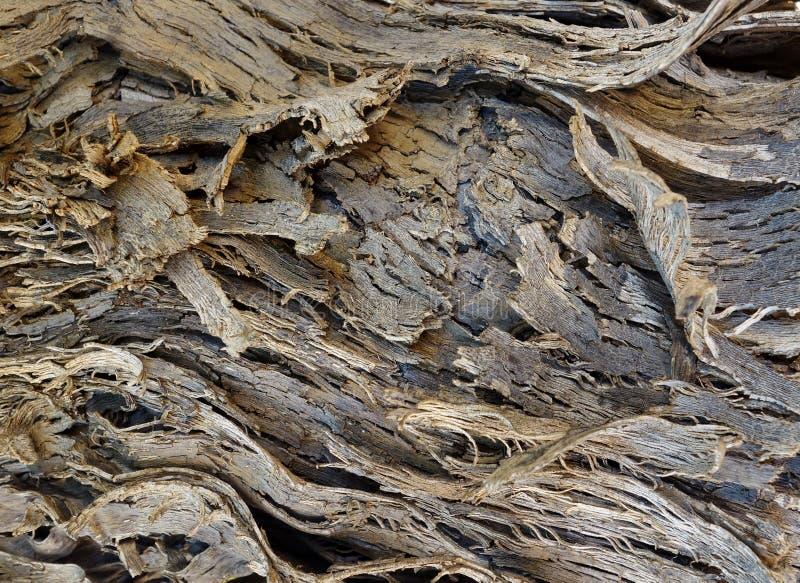 Χονδροειδής φλοιός δέντρων. στοκ φωτογραφίες