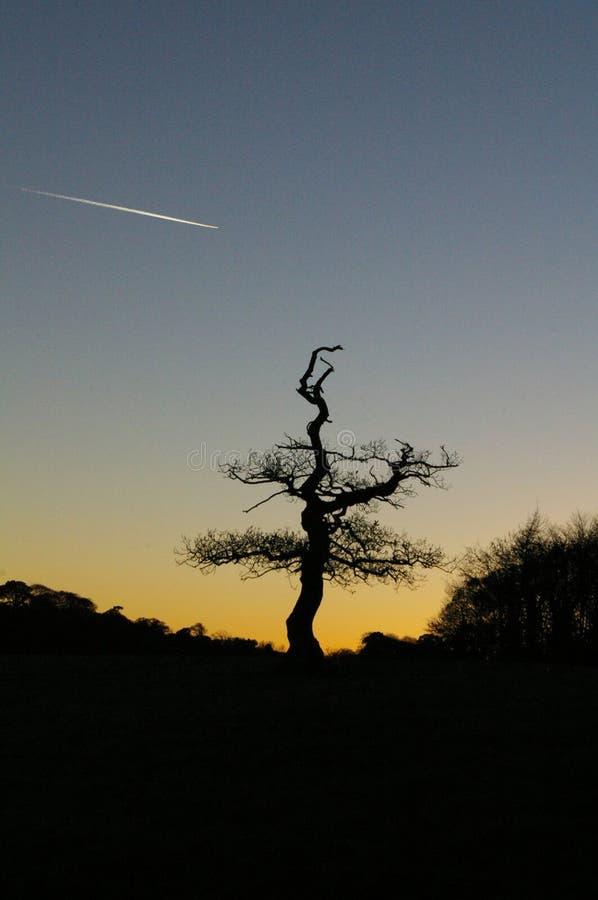 Χορευτής δέντρων στοκ εικόνες
