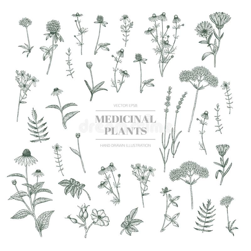 χορτάρια ιατρικά διανυσματική απεικόνιση