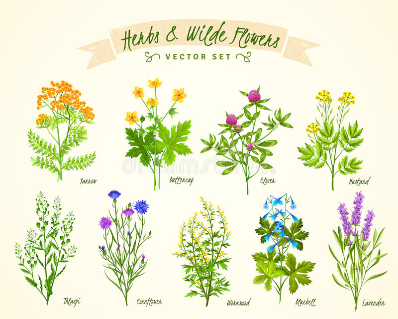 Χορτάρια και άγριο σύνολο υποβάθρου λουλουδιών διανυσματική απεικόνιση