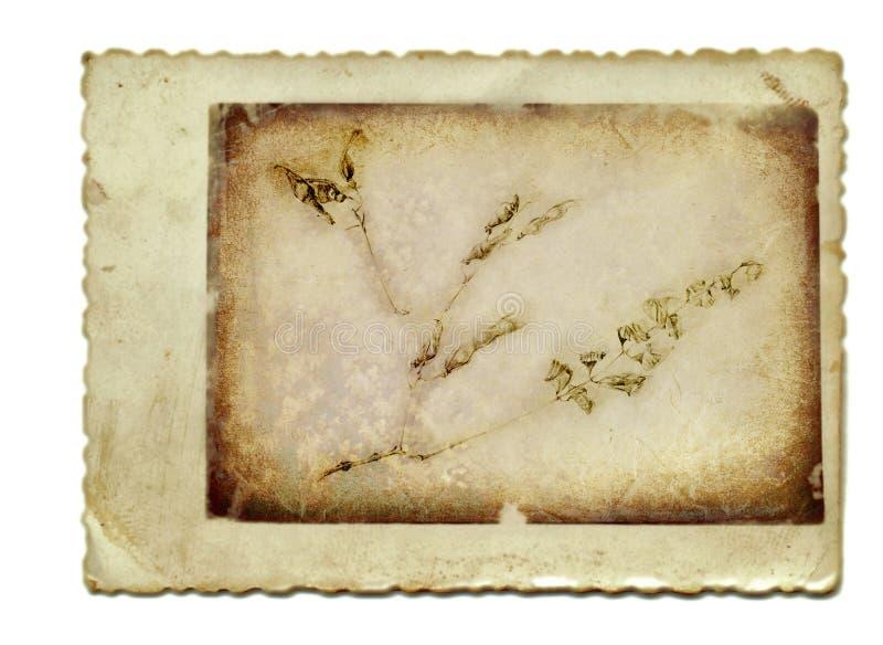 χορτάρια στοκ εικόνα με δικαίωμα ελεύθερης χρήσης
