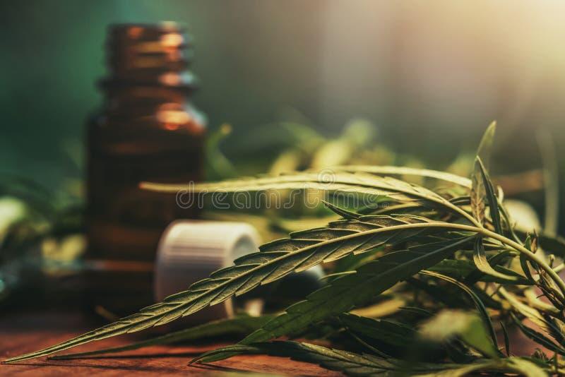 Χορτάρι και φύλλα καννάβεων με τα αποσπάσματα πετρελαίου στα βάζα r στοκ εικόνες