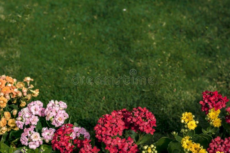 Χορτοτάπητας και υπόβαθρο λουλουδιών στοκ εικόνες με δικαίωμα ελεύθερης χρήσης
