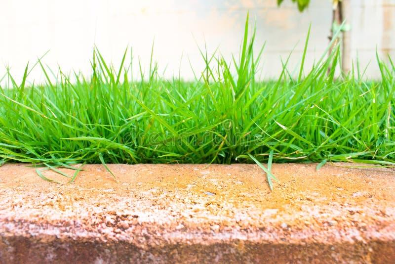 χορτοτάπητας πράσινος στοκ φωτογραφία με δικαίωμα ελεύθερης χρήσης