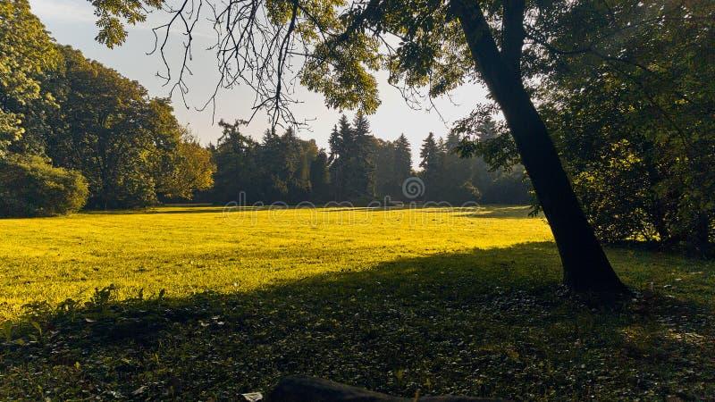 χορτοτάπητας στο πάρκο στην ηλιοφάνεια στοκ εικόνα