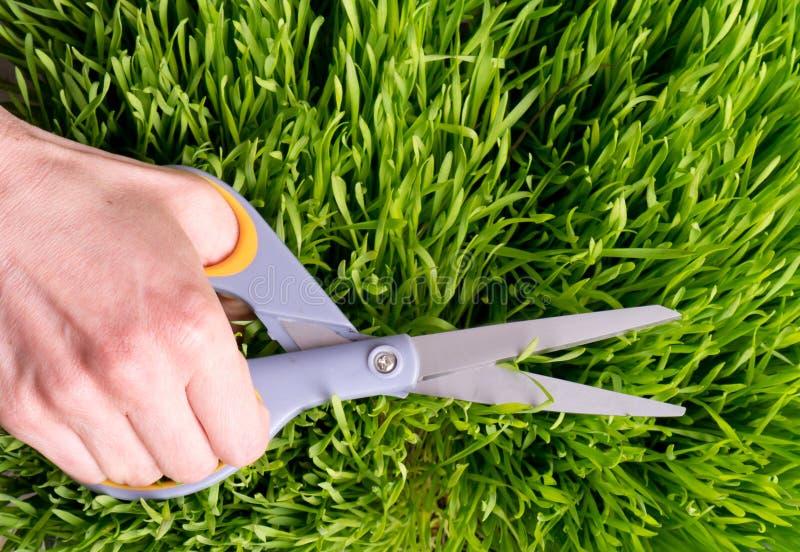 Χορτοτάπητας Manicured στοκ εικόνες