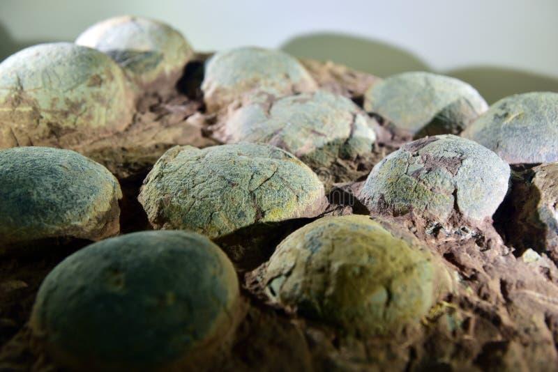 Χορτοφάγο απολίθωμα αυγών δεινοσαύρων στοκ εικόνες με δικαίωμα ελεύθερης χρήσης