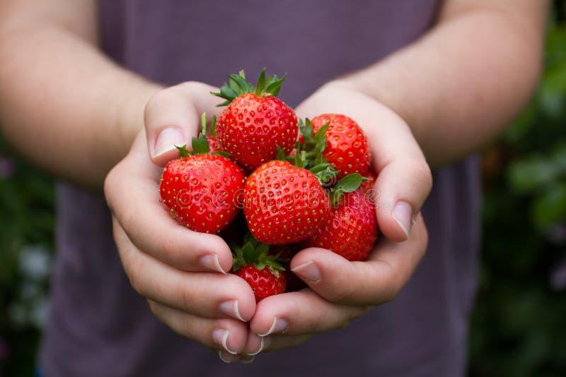 Χούφτα των ώριμων θερινών φραουλών στοκ φωτογραφίες με δικαίωμα ελεύθερης χρήσης