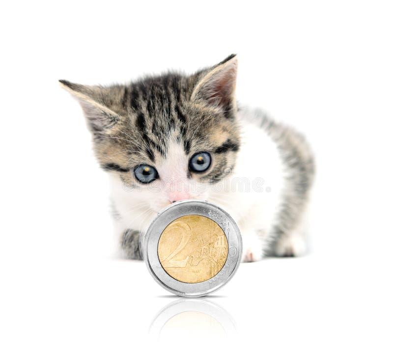 χρήματα γατών στοκ εικόνα με δικαίωμα ελεύθερης χρήσης