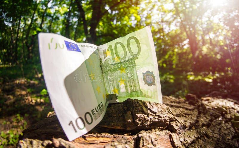 Χρήματα εγγράφου στον κομμένο κορμό δέντρων, ευρεία γωνία έννοιας αποδάσωσης στοκ φωτογραφία με δικαίωμα ελεύθερης χρήσης