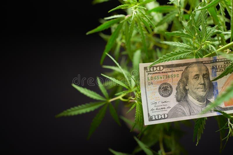 Χρήματα και κάνναβη, σε ένα σκοτεινό υπόβαθρο με ένα κενό διάστημα για την επιγραφή στοκ εικόνα με δικαίωμα ελεύθερης χρήσης