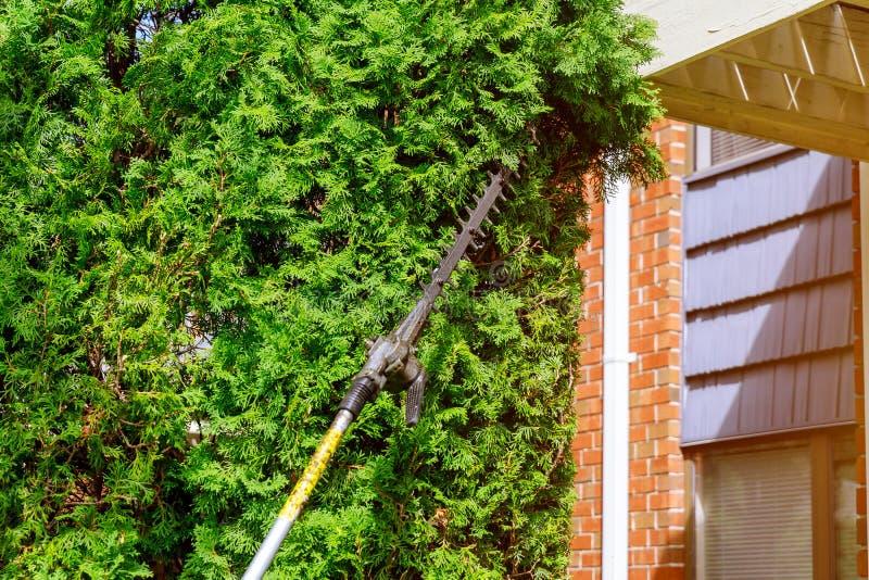 Χρησιμοποίηση trimmer φρακτών για να τακτοποιήσει τους θάμνους στοκ εικόνες