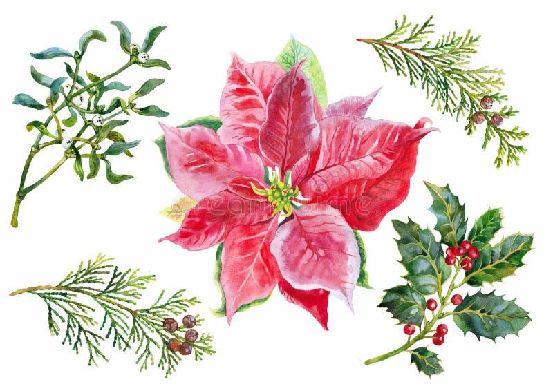 Χριστουγέννων γκι, arborvitae και poinsettia κλάδων καθορισμένο watercolor απεικόνιση αποθεμάτων