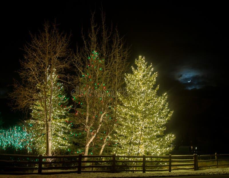 Χριστουγεννιάτικα δέντρα στο σεληνόφωτο στοκ φωτογραφία με δικαίωμα ελεύθερης χρήσης