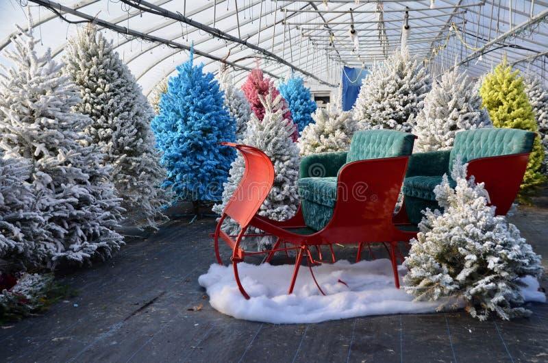 Χριστουγεννιάτικα δέντρα και έλκηθρο στοκ εικόνες