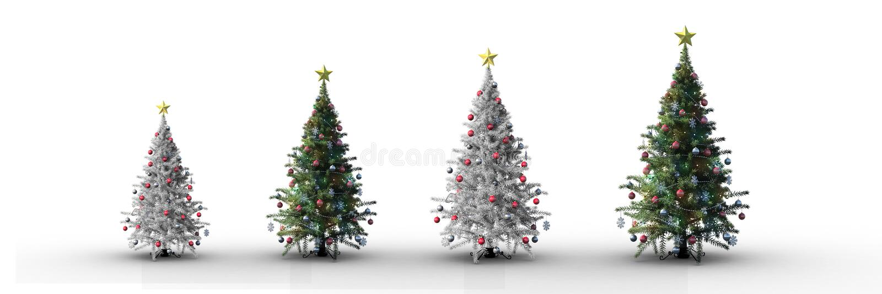 4 χριστουγεννιάτικα δέντρα που αυξάνουν με το άσπρο υπόβαθρο στοκ εικόνες