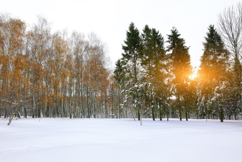 Χριστουγεννιάτικα δέντρα που καλύπτονται με το χιόνι στο πάρκο πόλεων Μέρη του χιονιού στοκ εικόνες