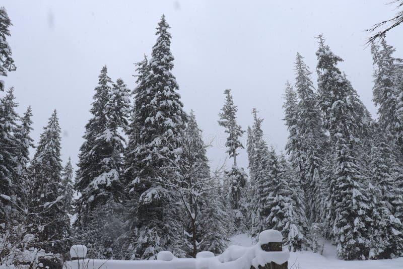 Χριστουγεννιάτικα δέντρα στο χιόνι υψηλά βουνά στοκ εικόνες