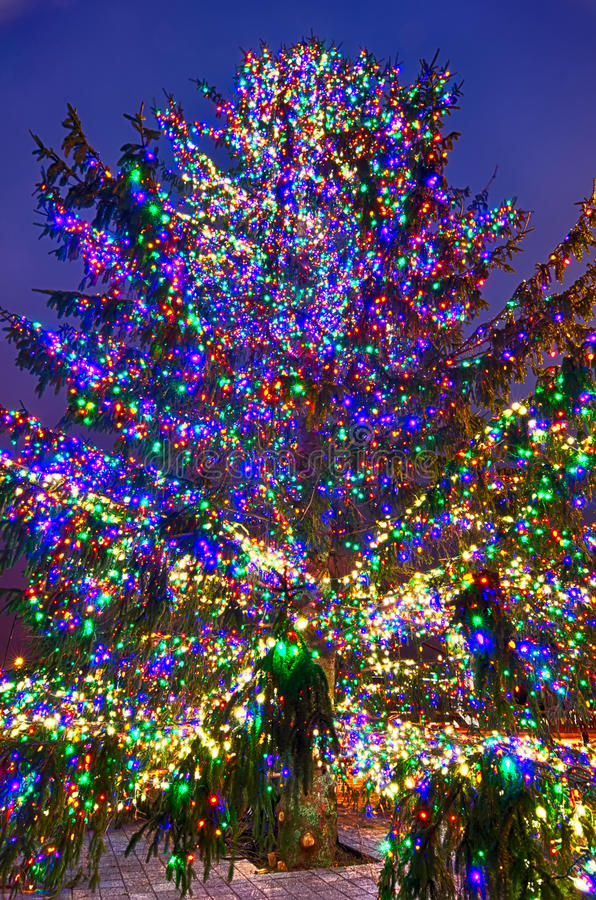 Χριστουγεννιάτικο δέντρο κοντά στο στάδιο πάνθηρων στη βόρεια Καρολίνα του Σαρλόττα στοκ φωτογραφίες με δικαίωμα ελεύθερης χρήσης