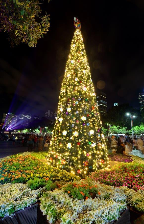 Χριστουγεννιάτικο δέντρο στον καθεδρικό ναό Σίδνεϊ του ST Mary στοκ φωτογραφίες με δικαίωμα ελεύθερης χρήσης