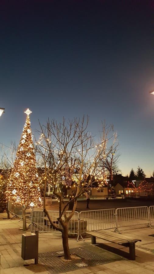 Χριστουγεννιάτικο δέντρο στο ελαφρύ αστέρι νύχτας στοκ εικόνα