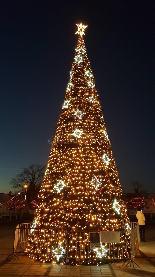 Χριστουγεννιάτικο δέντρο στο ελαφρύ αστέρι νύχτας στοκ φωτογραφίες