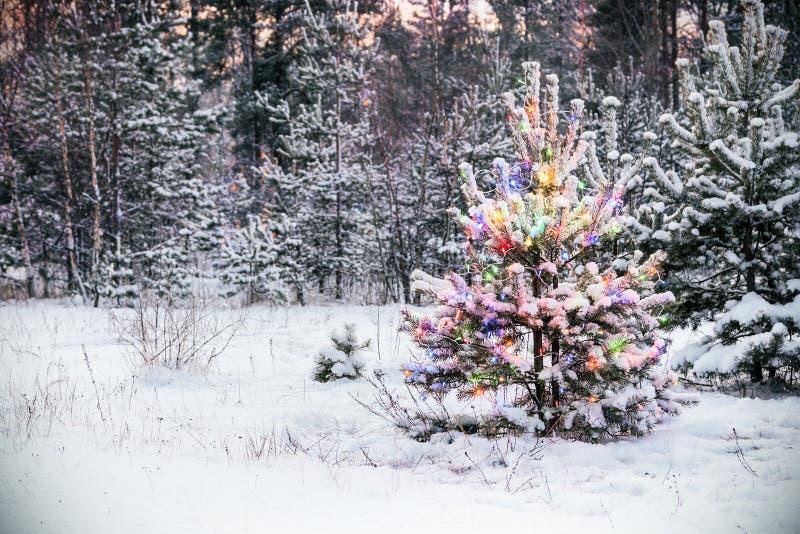 Χριστουγεννιάτικο δέντρο στο χειμερινό δάσος με τα χρωματισμένα φω'τα στοκ φωτογραφία
