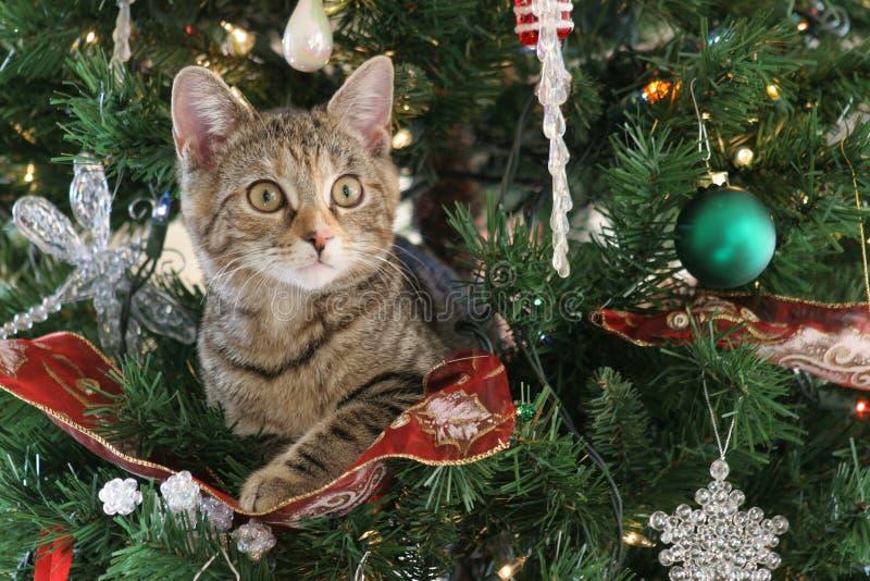 Χριστούγεννα γατών