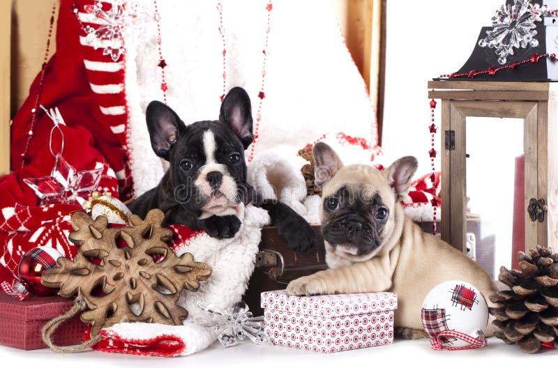 Χριστούγεννα γαλλικά μπ&omicro στοκ φωτογραφίες