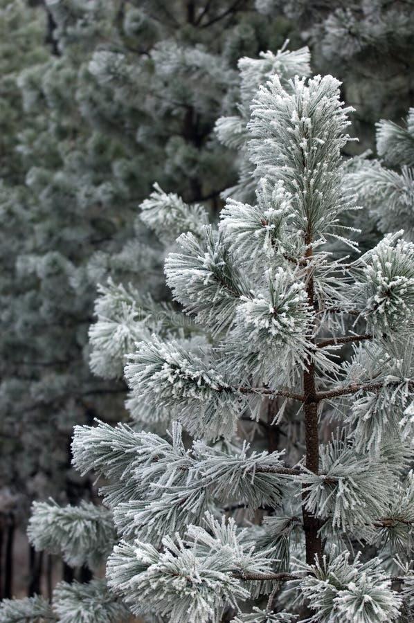Download Χριστούγεννα δέντρων στοκ εικόνες. εικόνα από κάρτα, σκι - 380284