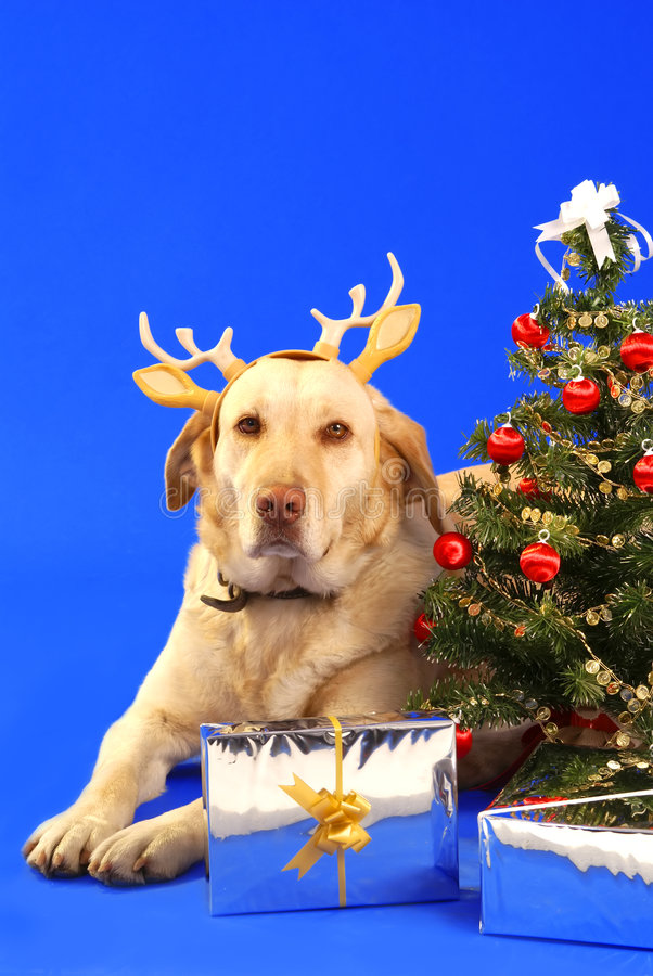 Χριστούγεννα dog2 στοκ εικόνες