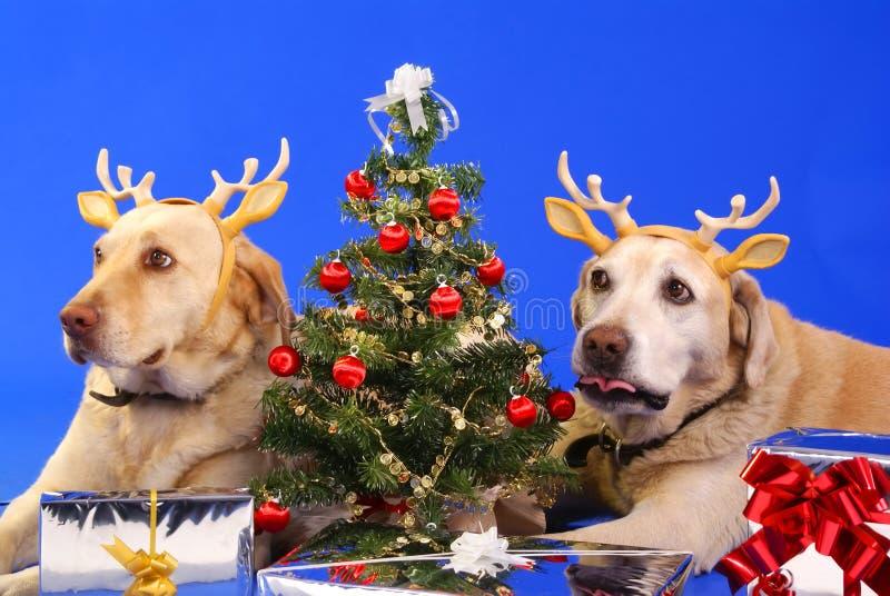 Χριστούγεννα dog3 στοκ εικόνα