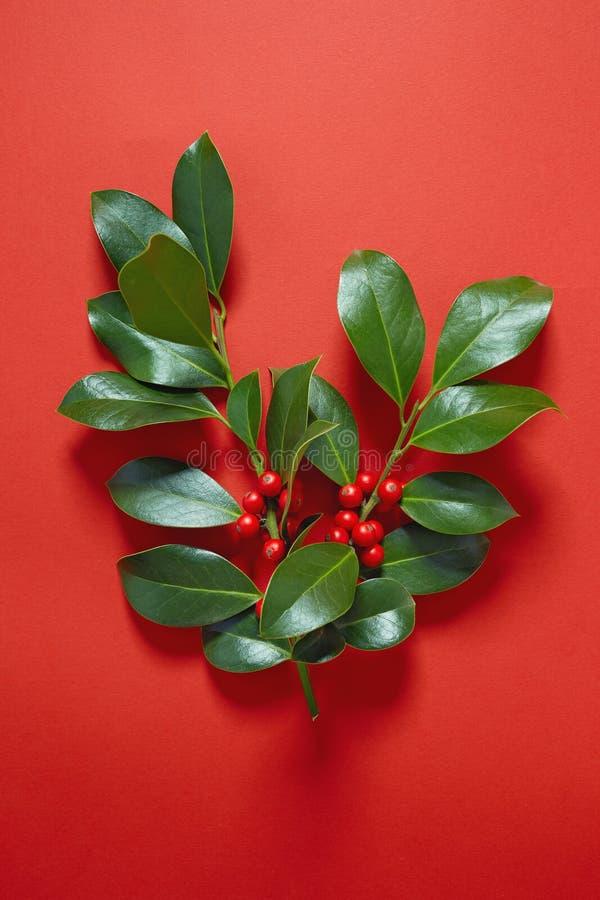 Χριστούγεννα Holly στο κόκκινο υπόβαθρο στοκ φωτογραφίες με δικαίωμα ελεύθερης χρήσης